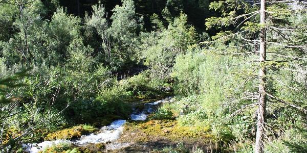 Etappe 23: Alvierbach