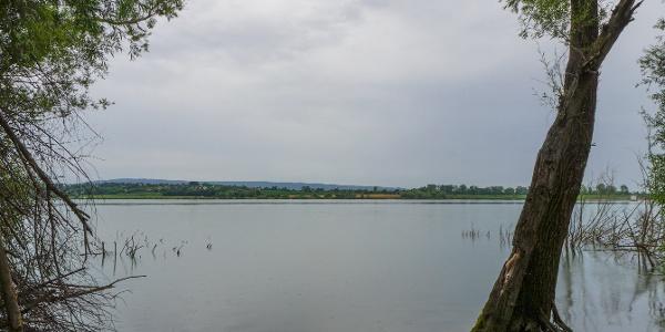 A tó nyugati partján találkozik az erdővel