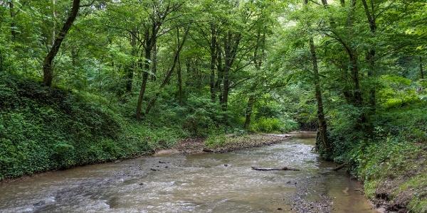 Potok Gaja na svojom hornom úseku ako vysokohorský potok
