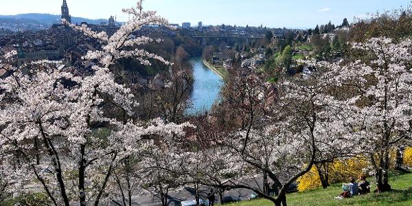Blick vom Rosengarten auf Bern und Aare.