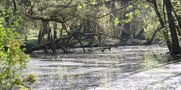 Frühlingssonne am Pfannwaldsee