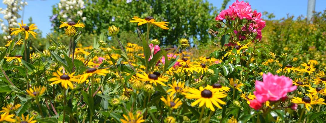 Blumenpracht in der 2-Thermenregion