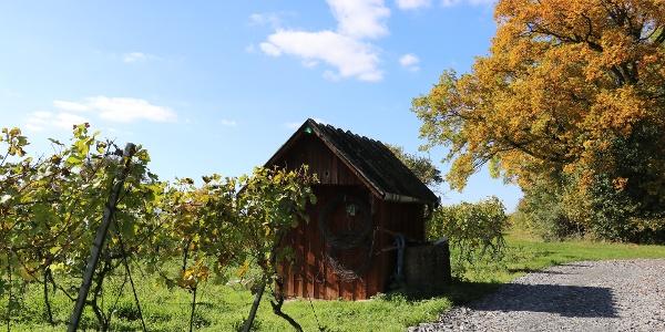Hüttchen in den Weinbergen