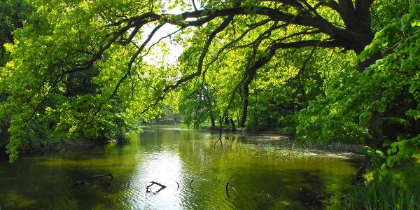 Im Unteren Peenetal verbirgt sich ein wahres Naturparadies mit einer vielfältigen Flora und Fauna.
