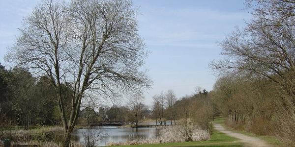 Seewoog in Miesenbach