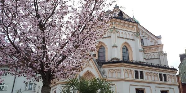 Kirschblüte im Frühling in Rosenheim