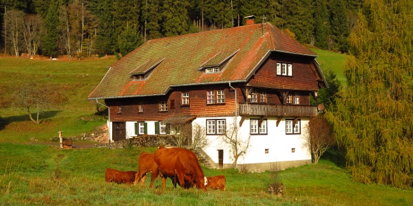 Traditional Black Forest Farms