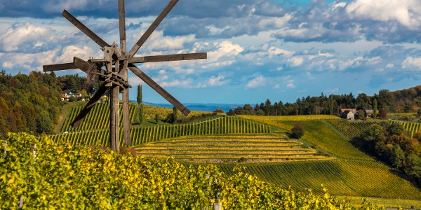 Aussicht vom Stermetzberg Richtung Weingut Gross