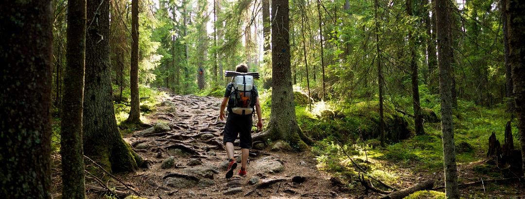 Zeit im Wald senkt den Blutdruck und hebt die Stimmung