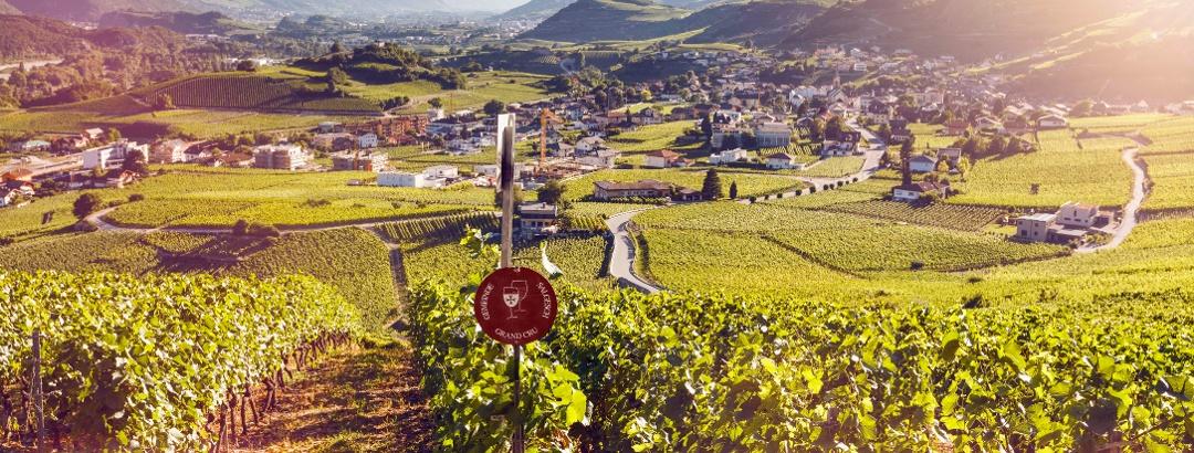 Weinberg oberhalb Salgesch