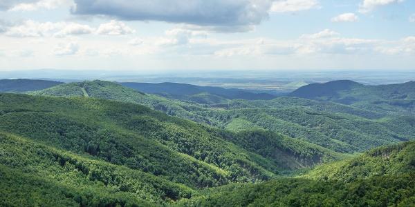 Hatalmas erdőségek (Csóványosi kilátó)
