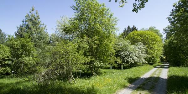 Weg im Arboretum Haslach