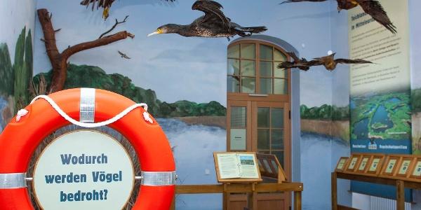 Dauerausstellung im Vogelschutzpavillon