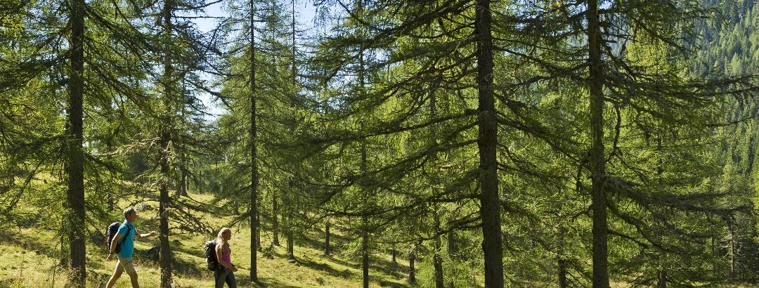 Durch den Lärchenwald im Langalmtal