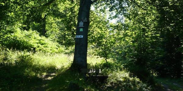 Abzweig Maronenweg - Hüttenweg unterhalb des Kostenfelsen