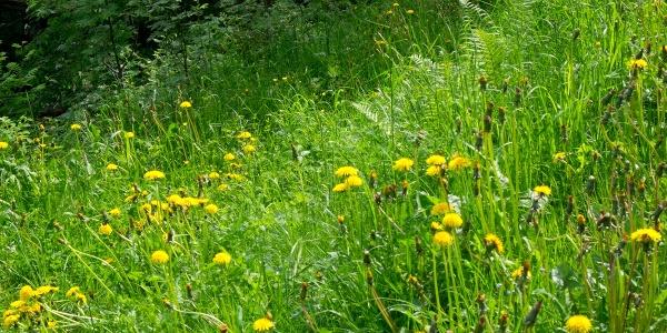 Pfad durch hohe Gräser in der Saurenbachschlucht