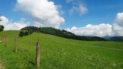 Durch_einen_schönen_Hochwald_Ausblick