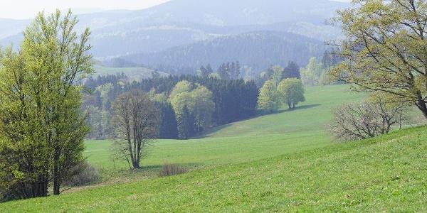 duftende Bergwiesen  | Foto: S. Grüning