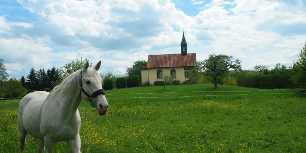 Dielheim - Balzfeld: Ländliche Idylle