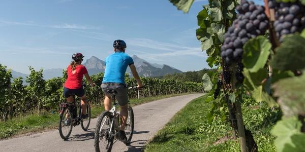 Gemütliche E-Bike Tour durch die Reben der Bündner Herrschaft