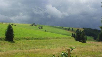 Grenzwiesen am Hirschbach (Aug. 2008)