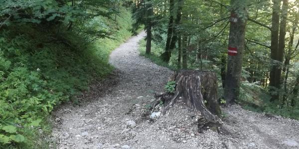 Durch den Wald zur Hackel Hütte