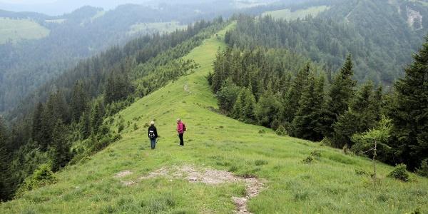 Weg von der Gemeindealpe zur Halter-Hütte
