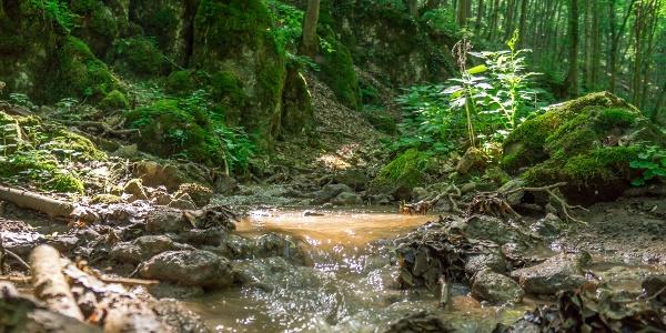 A Tohonya-patak után nem találkozunk vízzel