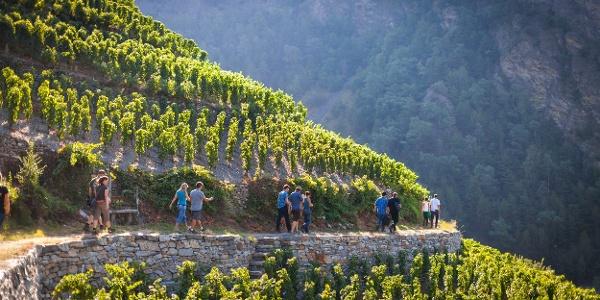 Hikers on the trail «Reblehrpfad - Heidaweg» to Visperterminen
