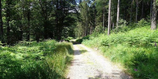 Breite Schotterwege und naturnahe Pfade prägen das Bild des Rundwanderweges