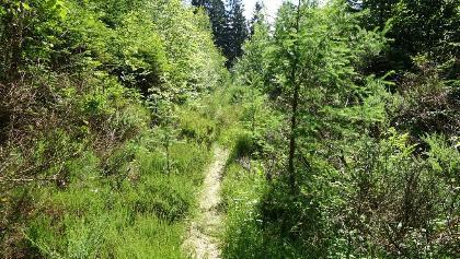 Spannende Wegeführung auf schmalen Pfaden