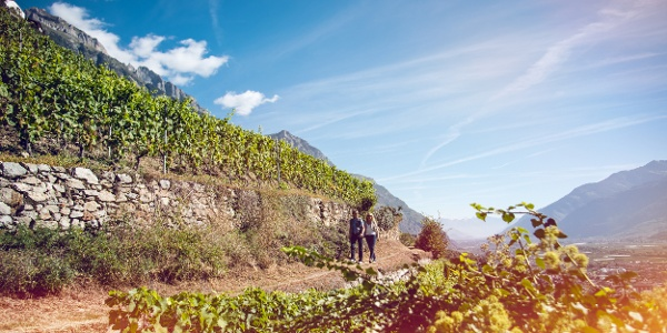 On the Vineyard Trail from Sion to Venthône