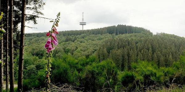 Ausblick vom Weg zur Eisernhardt