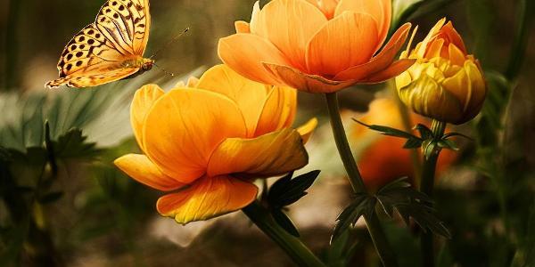 Blumen und Gartenschau Altzella
