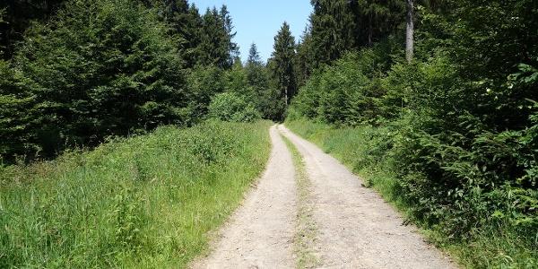 Wegeverläufe entlang blühender Wiesen und durch ruhige Wälder