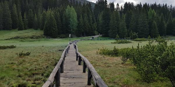 Sumpfwiesen