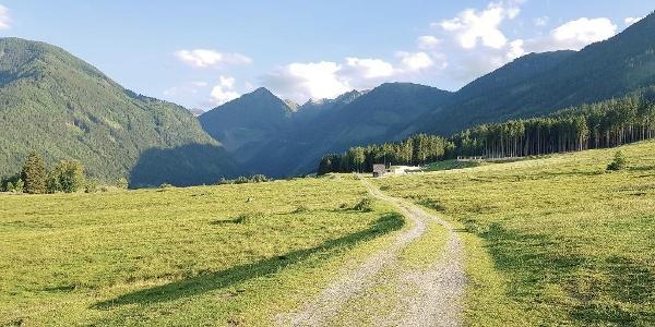 Rohrmooser Frei - an alpine meadow directly in Rohrmoos