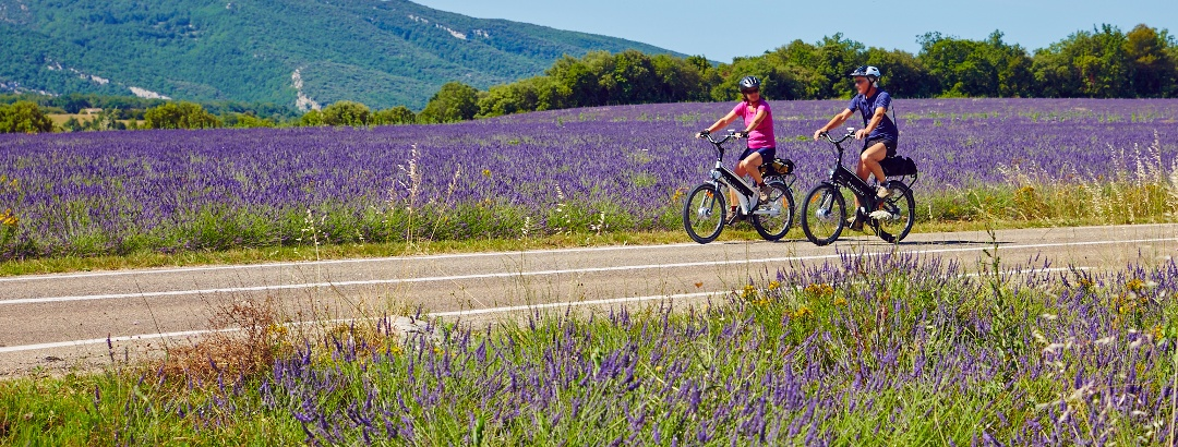Radfahren zwischen Lavendelfeldern