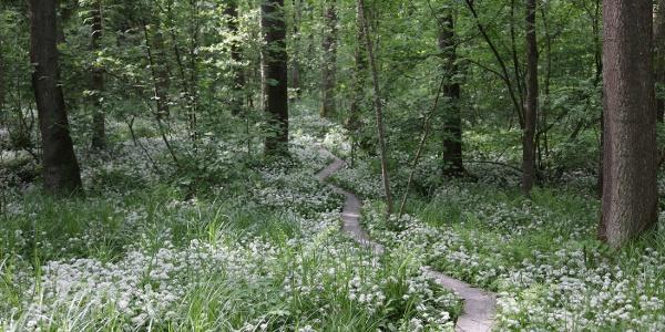 Bohlenpfad