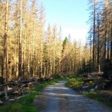 Schotterpiste im Nationalpark Harz