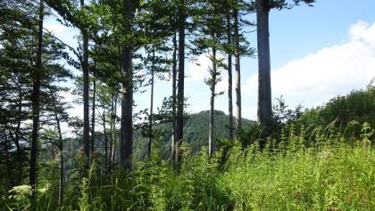 Übergang vom Zederbauerspitz zum Ochsenkogel