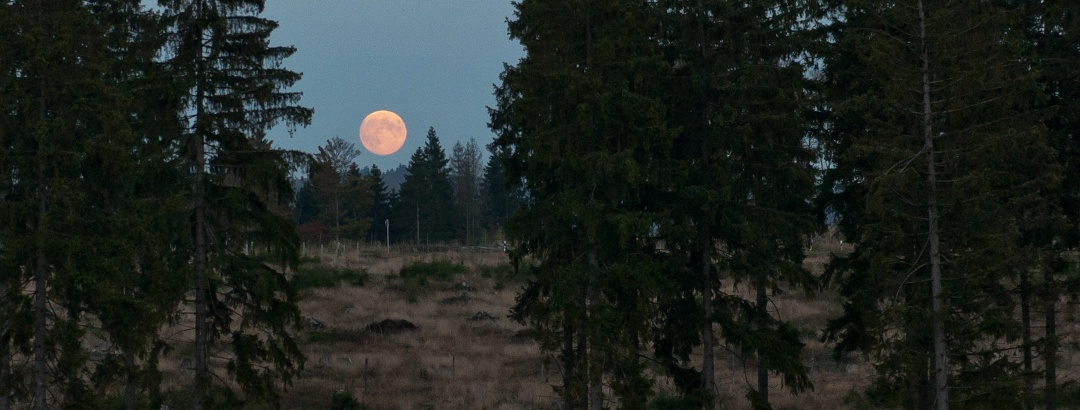 Vollmond in der Wisent-Wildnis