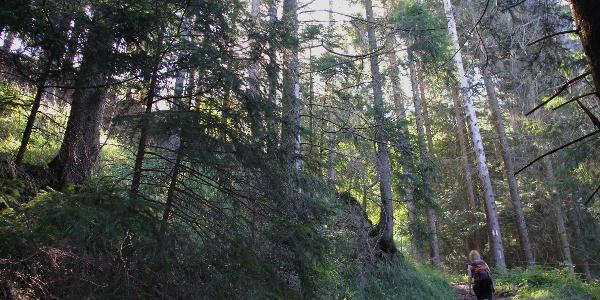 Zu Beginn ein Aufstieg durch den Wald.
