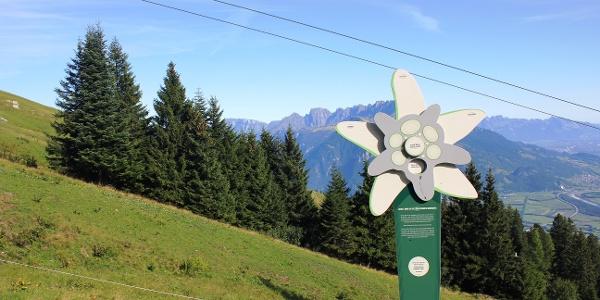 Info-Station am Edelweiß Weg