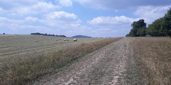 Feldweg in Richtung Sattelberg