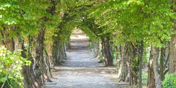 Schlosspark Pöllau: Allee