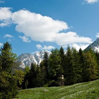 Narzissenwiese Bärental