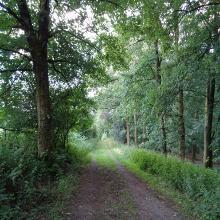 Waldweg bei Halver