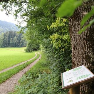 Weg WaldApotheke