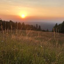 Rodelbahn der Lauschhütte im Sommer